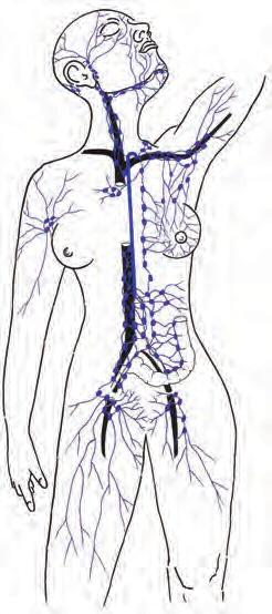vacumed-opis-7